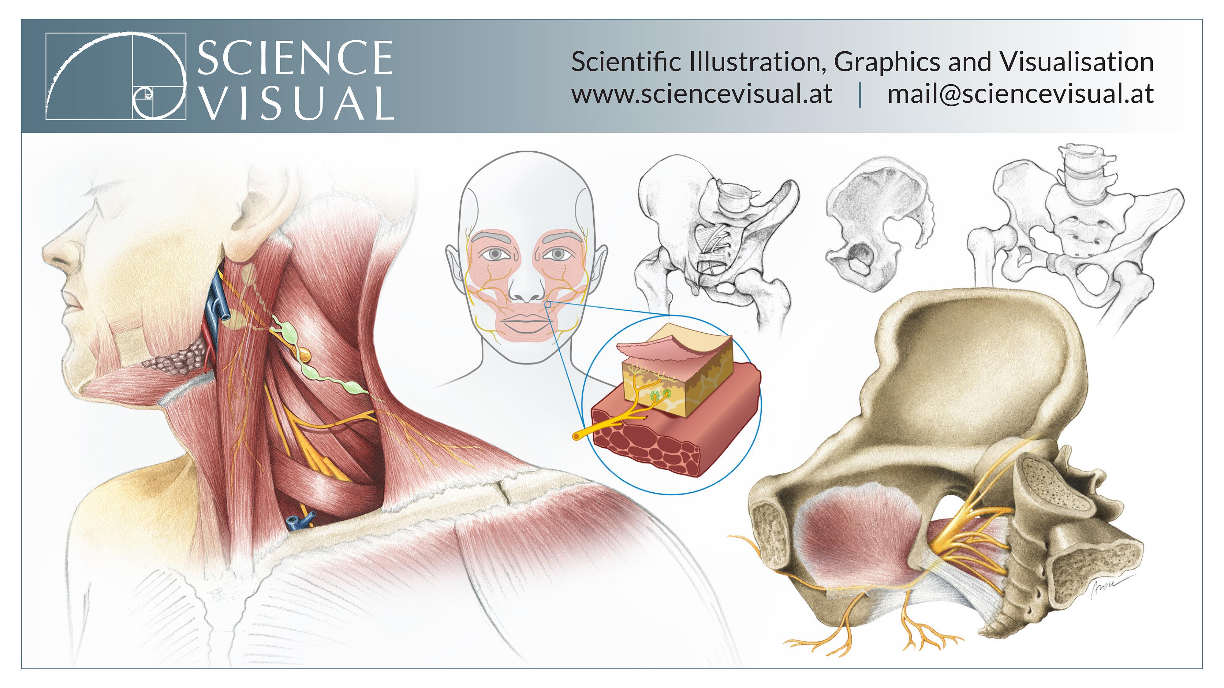 Science Visual - Scientific Illustrations by Aron Cserveny